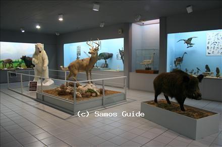 Samos Paleontological Museum
